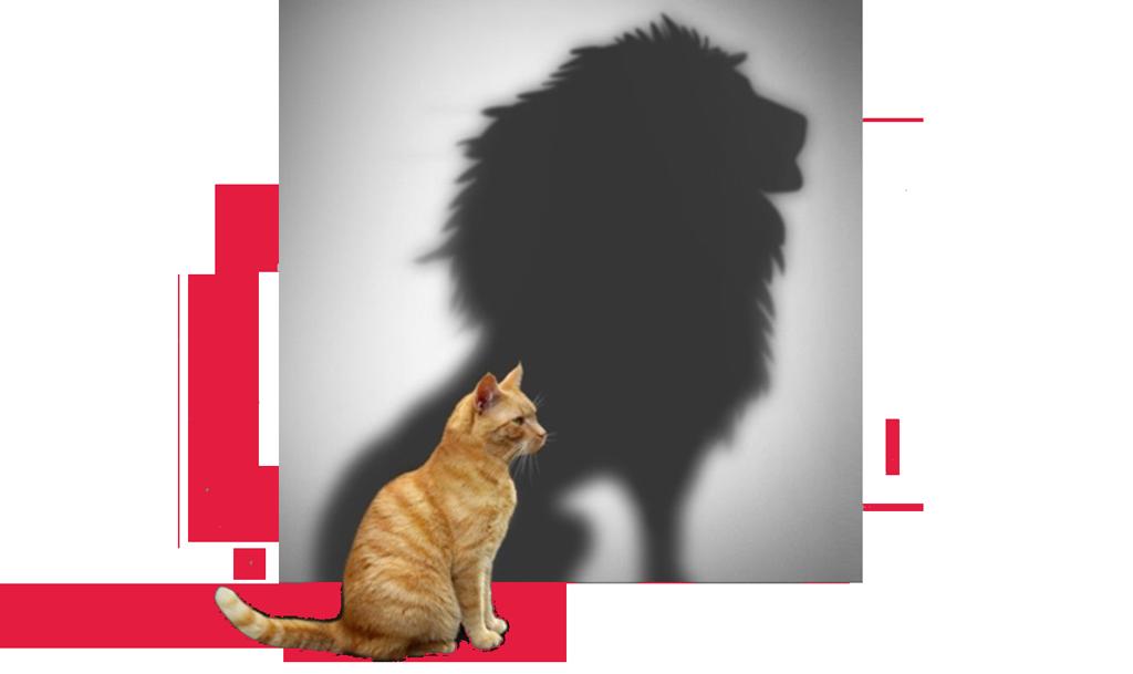 illustration-chat-lion